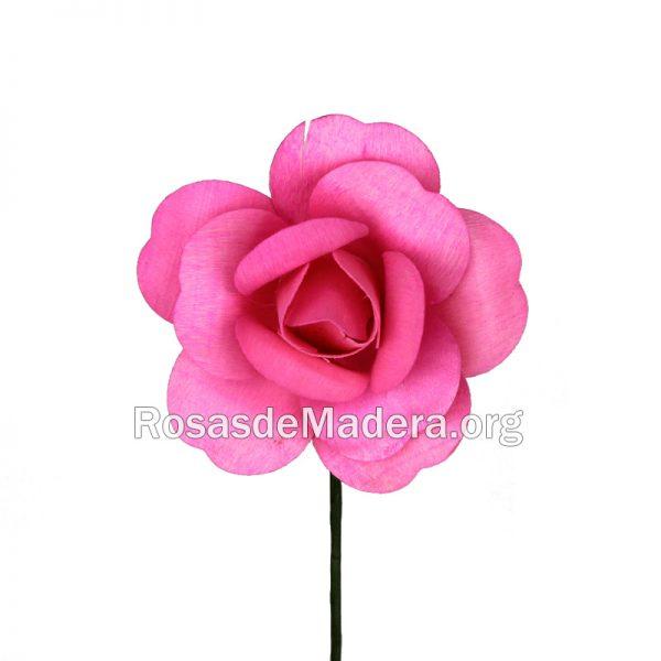 Rosa rosa abierta